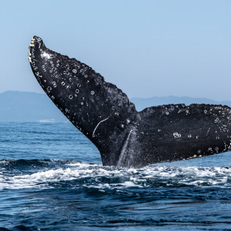 Whale watching cruise package